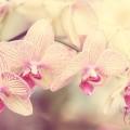 orchideen_leinwand_mexi-photos_IMG_2852